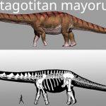 Patagotitan mayorum – cel mai mare dinozaur are acum nume