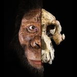 Australopithecus anamensis are acum un chip (video)